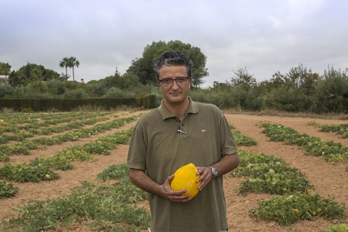 Melón de Ontinyent 'Diamante': José Vidal en el campo. Foto: Eva Mañez