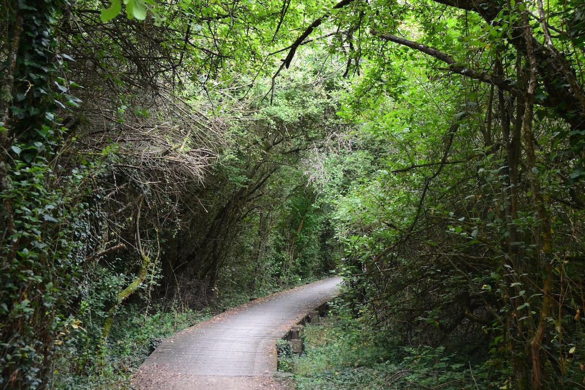 Pasarela que entra hacia el bosque en la ruta circular de Garaio. Foto: Júlia Manresa