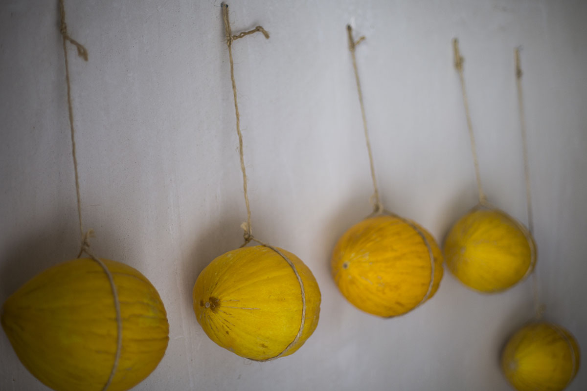 Melón de Ontinyent 'Diamante': Melones colgados. Foto: Eva Mañez