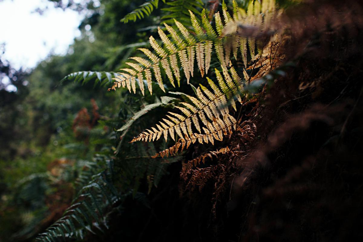 Especies de otra época conviven en el parque de Anaga. Foto: Rocío Eslava