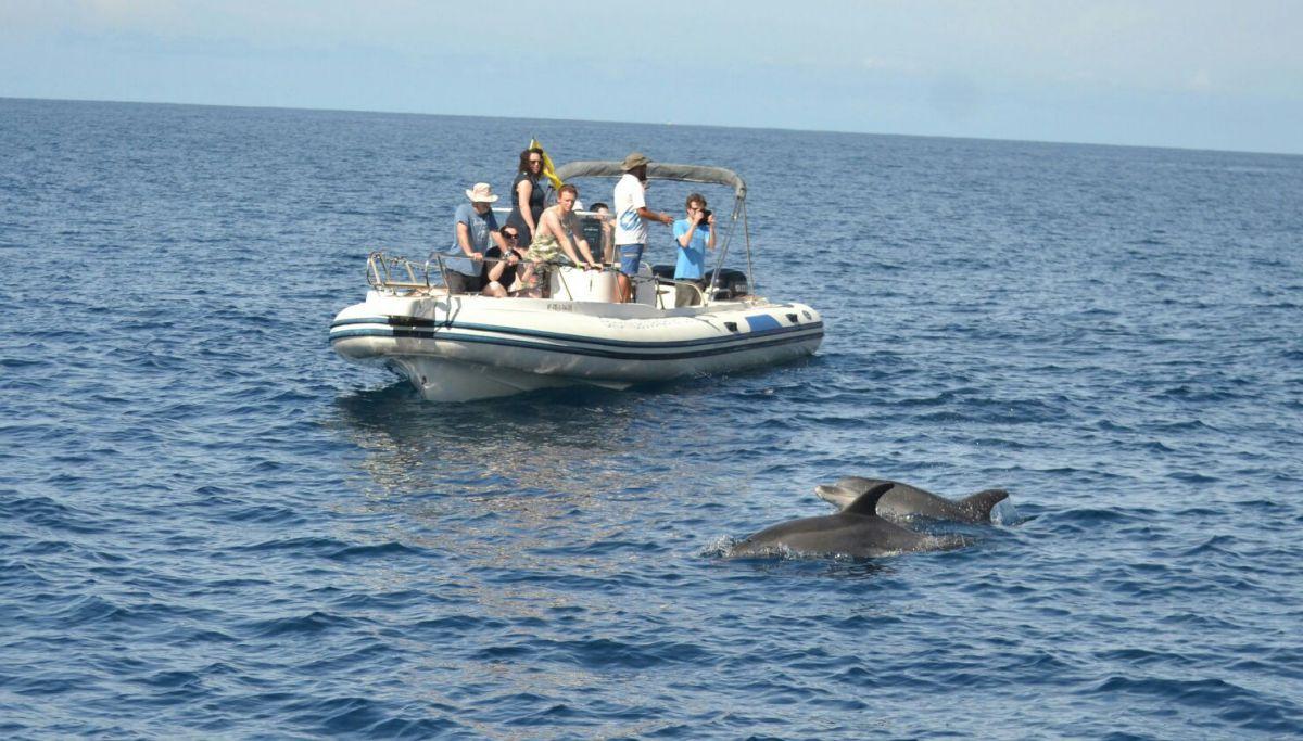 Embarcación del Atlantic Eco Experience. Foto: Cedida