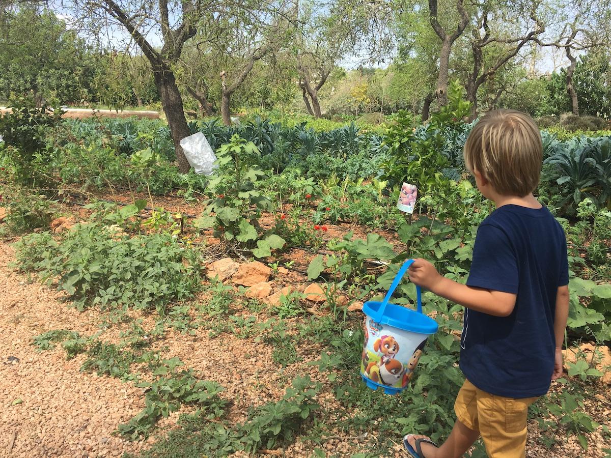Un niño recolecta tomates del huerto. Foto: Beatriz Vigil