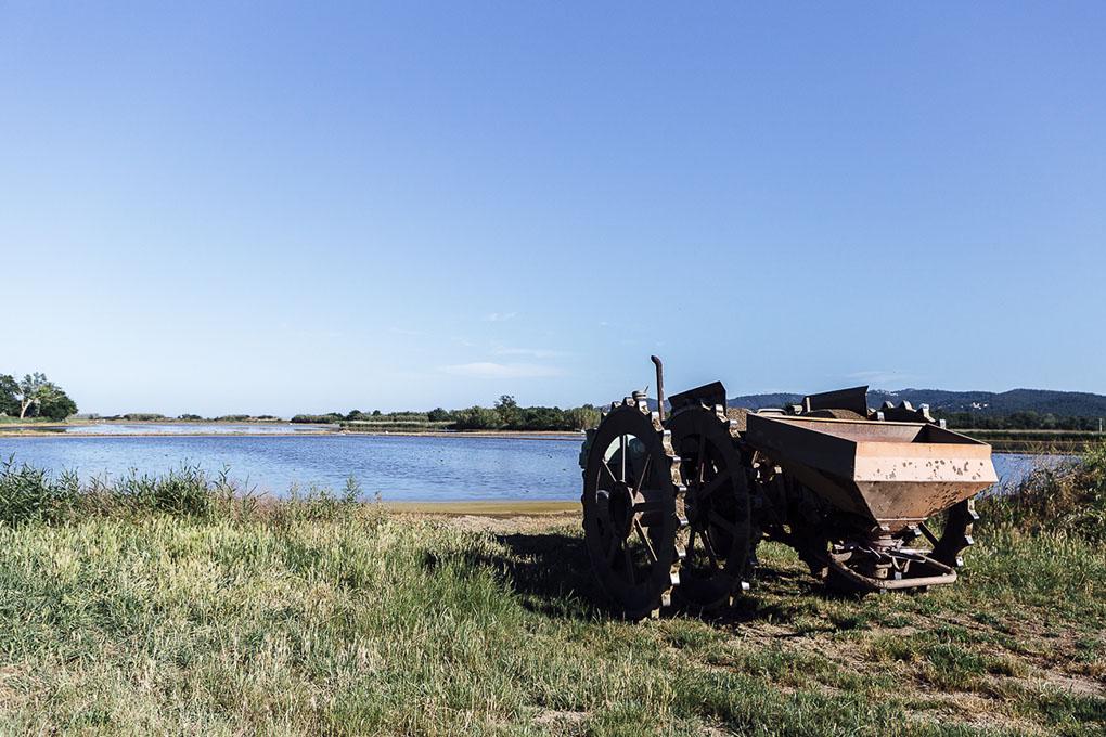Pals (Bajo Ampurdán, Baix Empordà) - arrozales con tractor - Foto: César Cid