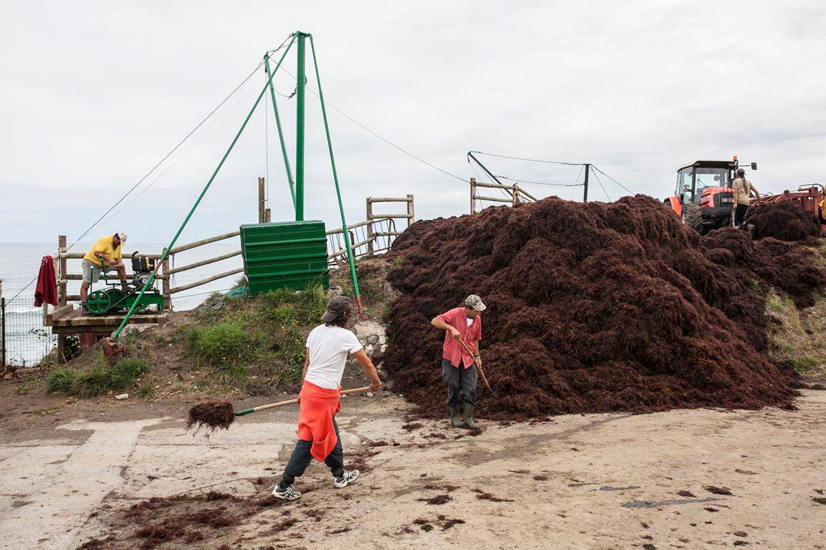 El alga roja no da tregua. Foto: José García