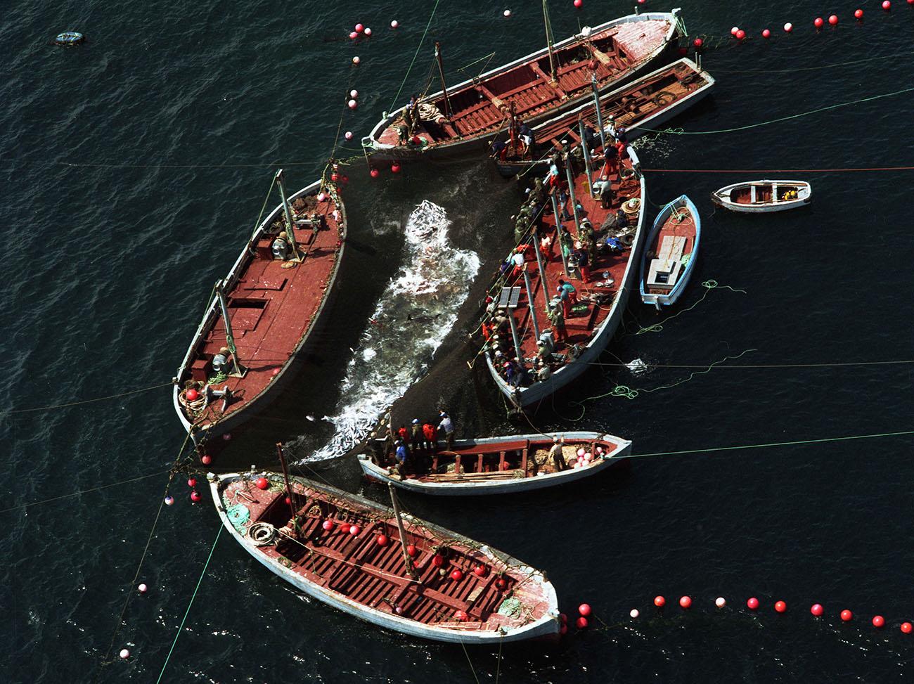 Tarifa: Barcos pescando (2). Foto: M. Rojas