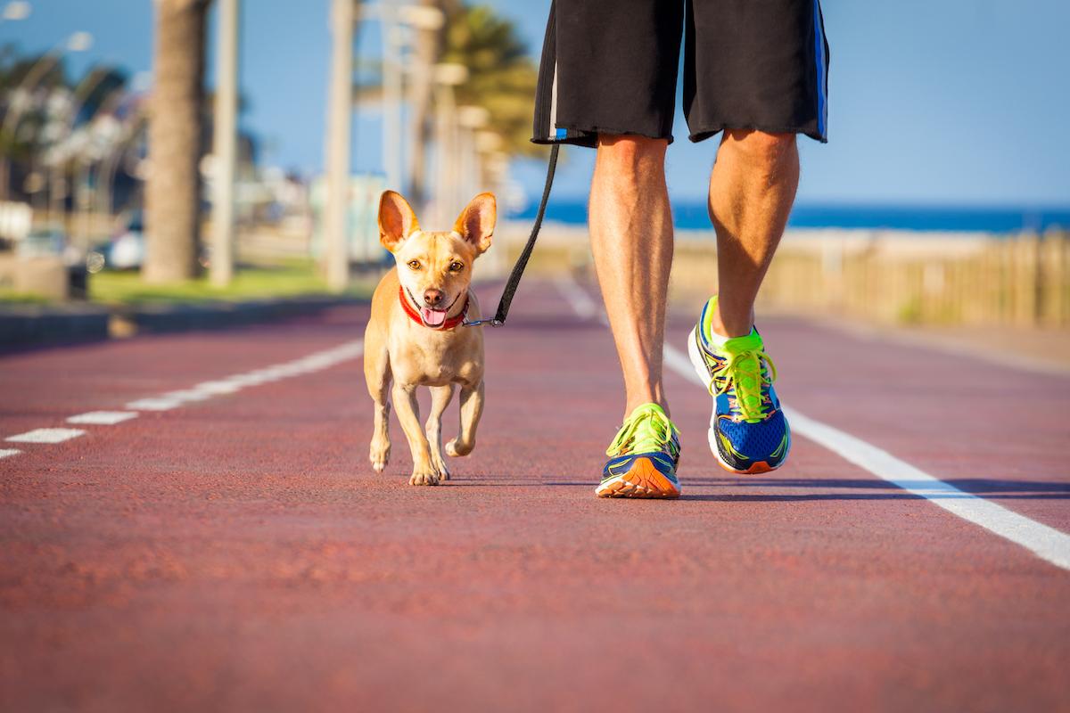 Un perro paseando con su cuidador. Foto: Shutterstock