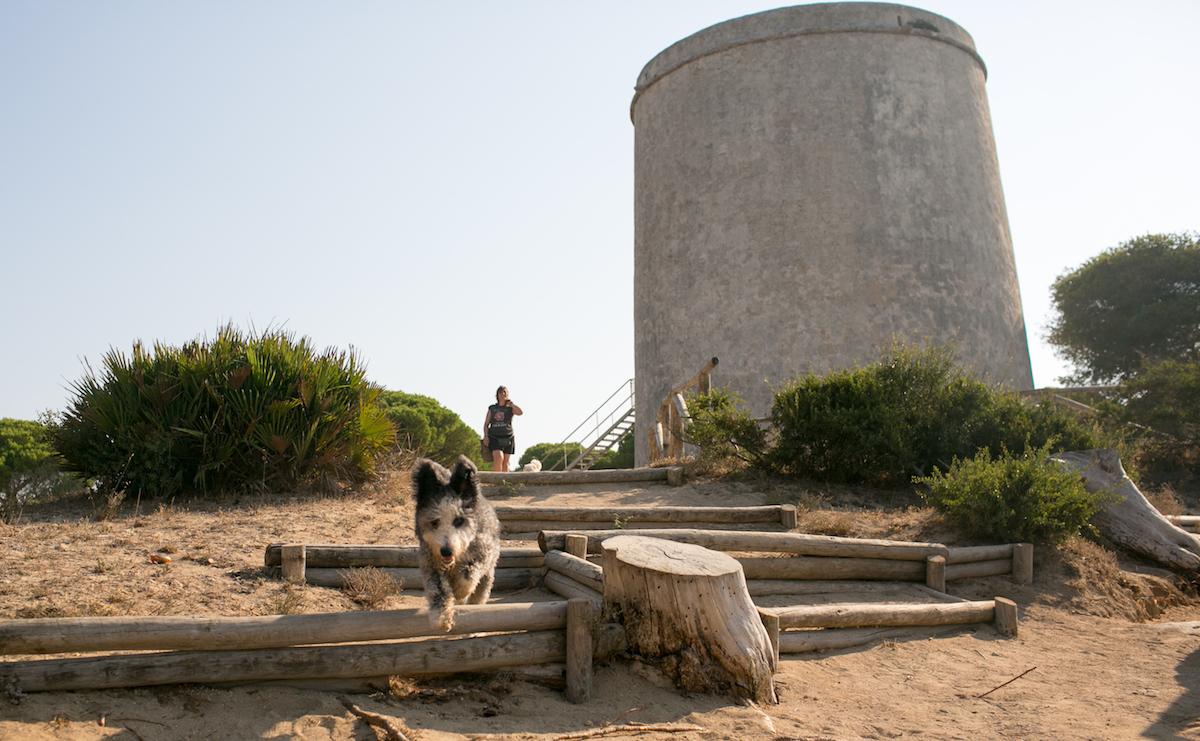 Perro saltando junto a la torre