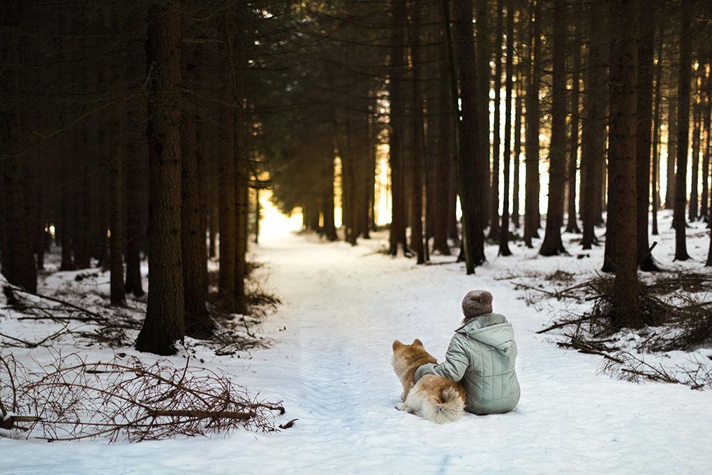 Puesta de sol con mascotas. Foto: Shutterstock