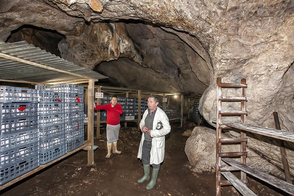 Queso Picón Bejes-Tresviso: Cueva La Sotorraña -queseros-. Foto: José García