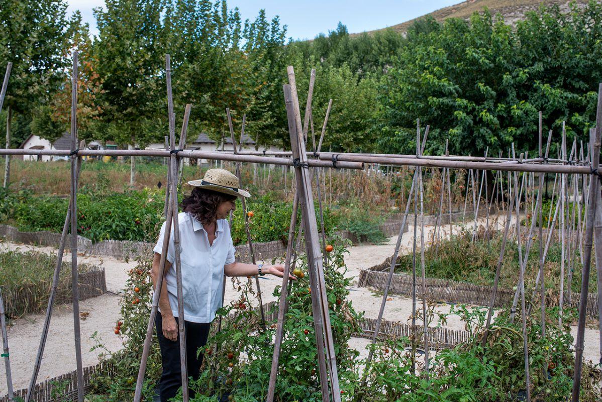 Amparo muestra las tomateras de la huerta de Carabaña. Foto: Alfredo Cáliz