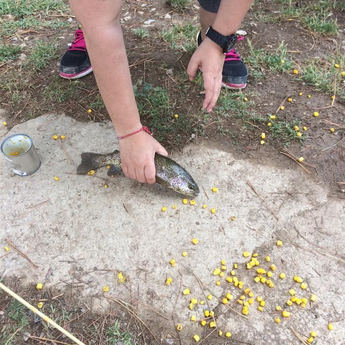 Trucha y maíz de cebo. Foto: Joana Saldón