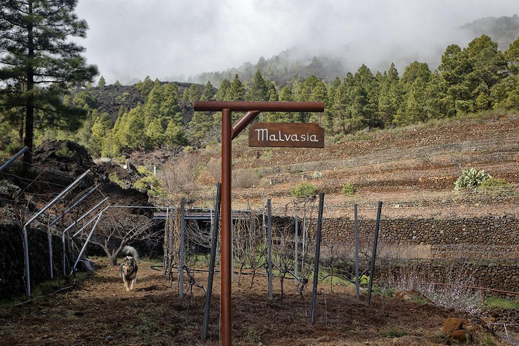 Vinos de Tenerife: Bodegas Ferrera finca Las Vigas. Foto: Roberto Ranero