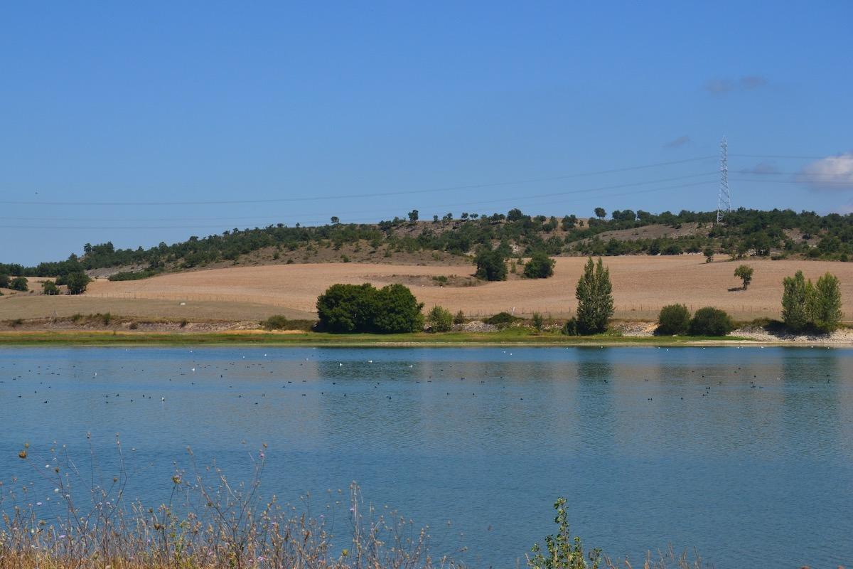 Flora y fauna del embalse Uribarri-Gamboa. Foto: Júlia Manresa