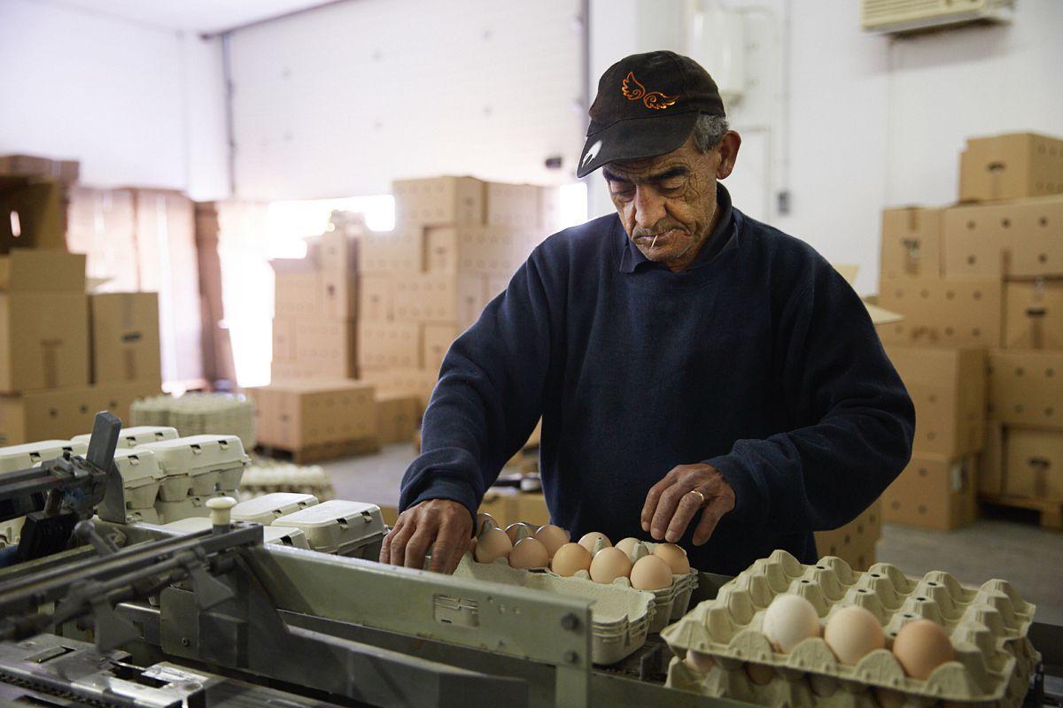 Un trabajador en la granja avícola Fracua. Foto: Yoana Salvador