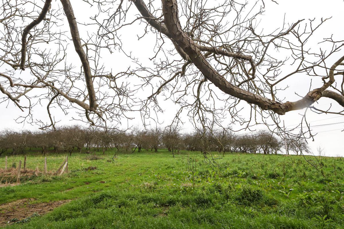 En contacto con los manzanos. Foto: Yoana Salvador
