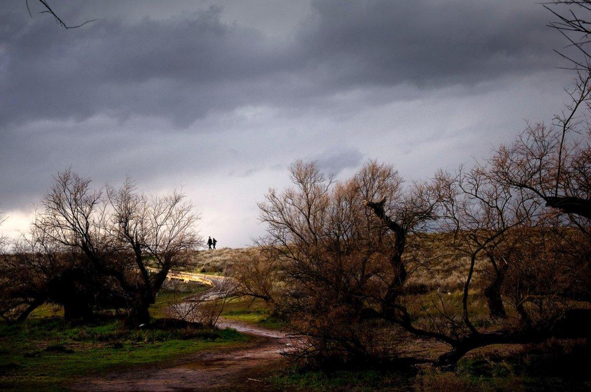 Parque Nacional de las Tablas de Daimiel (2). Foto: Manuel Ruiz Toribio