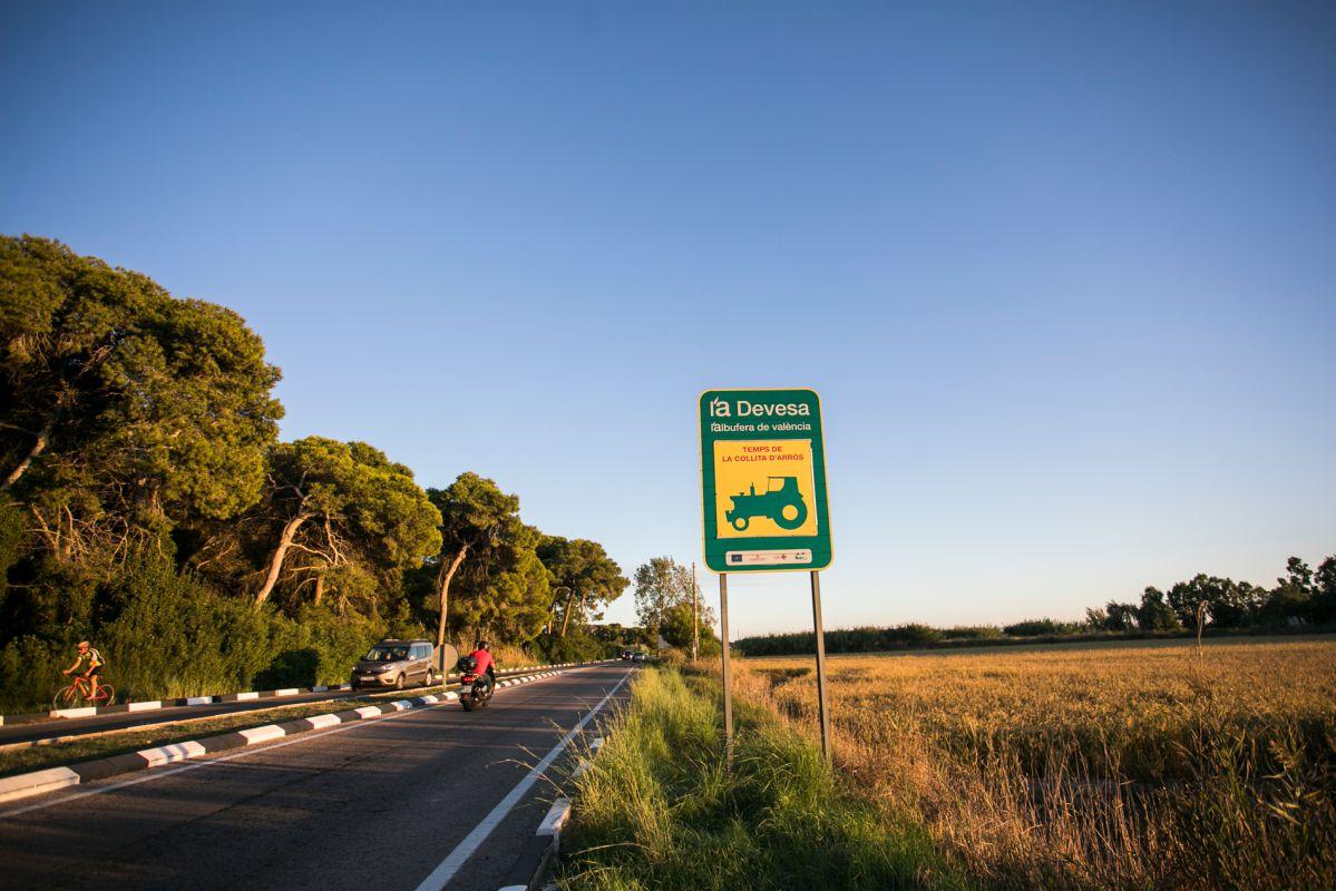 La carretera que conduce a L'Albufera. Foto: Eva Máñez