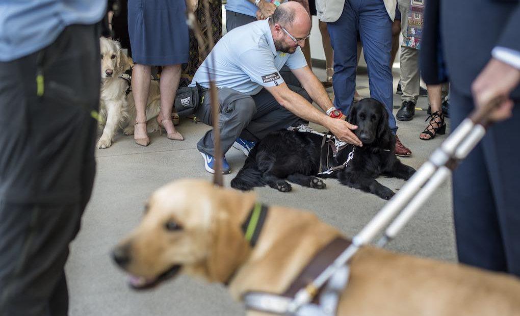 Perros guía de la actividad. Foto: Alfredo Cáliz
