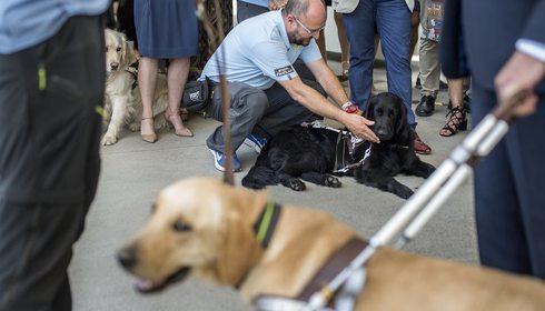 Viajar con perros guía | Guía Repsol