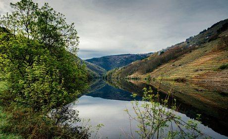 Ribera rio Miño. Foto: Clara Vilar