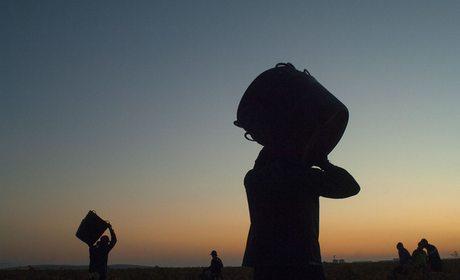 Vendimia, la Mancha