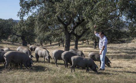 Jamones de bellota Castro Fuerte | Guía Repsol