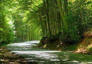 Las carreteras de Montseny son una maravilla para la moto. / Creative Commons. Flickr Xavi