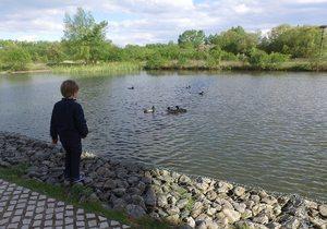 Excursión con niños al Parque de Salburua (Vitoria)   Guía Repsol