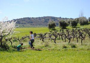 Viñas y olivos por el camino. Foto: Mamadú Dabó
