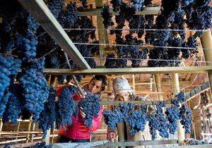 Vino supurao, La Rioja. Foto: Miguel Herreros