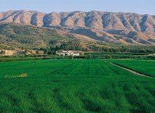 Campos de arroz, en Calasparra