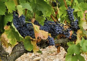Vinos de Castilla y León