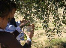 niños en la recogida de olivas