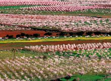 Panorámica de la huerta murciana en primavera