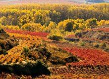 Paisaje multicolor de viñedos, en La Rioja