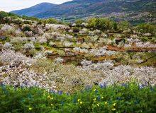 Campos del valle del Jerte