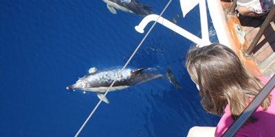 Delfines avistados desde la proa del Karyam