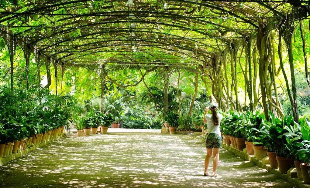 La Concepción Jardín Botánico Histórico de Málaga_Apertura. Foto Shutterstock