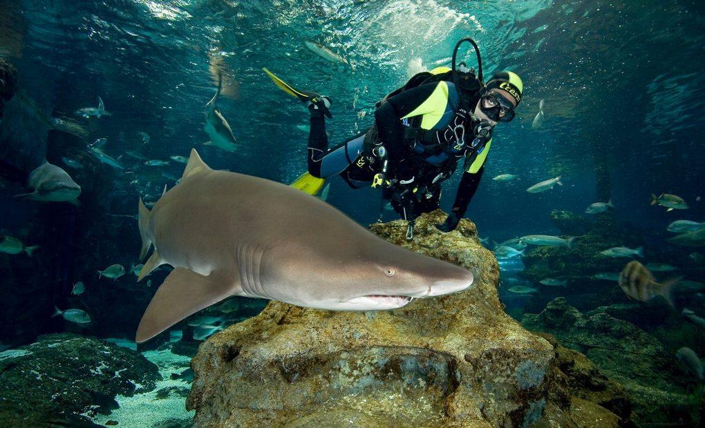 Los mejores acuarios de espa a y portugal gu a repsol for Mejores peces para acuario