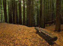 Bosque cántabro