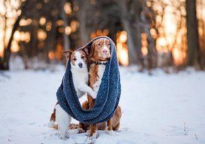 Cómo abrigar a tu perro en los meses de frío   Guía Repsol