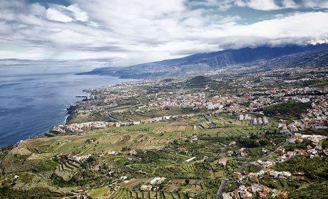 Vinos de Tenerife: Denominaciones de Origen y bodegas | Guía Repsol