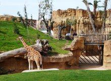 Bioparc, con sus tres ecosistemas diferentes, se ha convertido en un zoo innovador