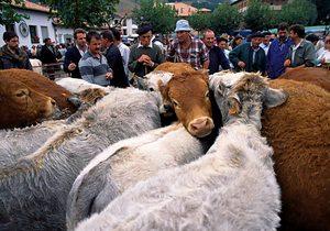 Compraventa de ganado en la Feria de Potes