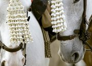 Caballos en la Feria de Fuengirola