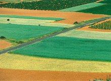 Espectáculo de colores en los campos de cultivo de Alfaro