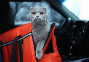 Consejos para viajar con tu animal de compañía   Guía Repsol