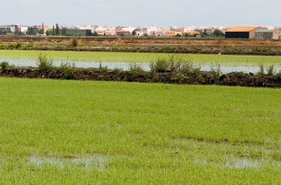 Humedal La Marjalería