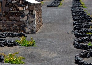Vinos de Islas Canarias