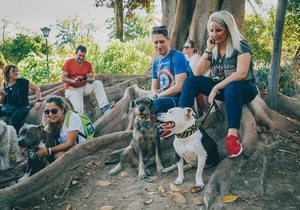 Recorrer Sevilla con perros educados | Guía Repsol